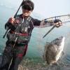 香港でチヌ釣り動画