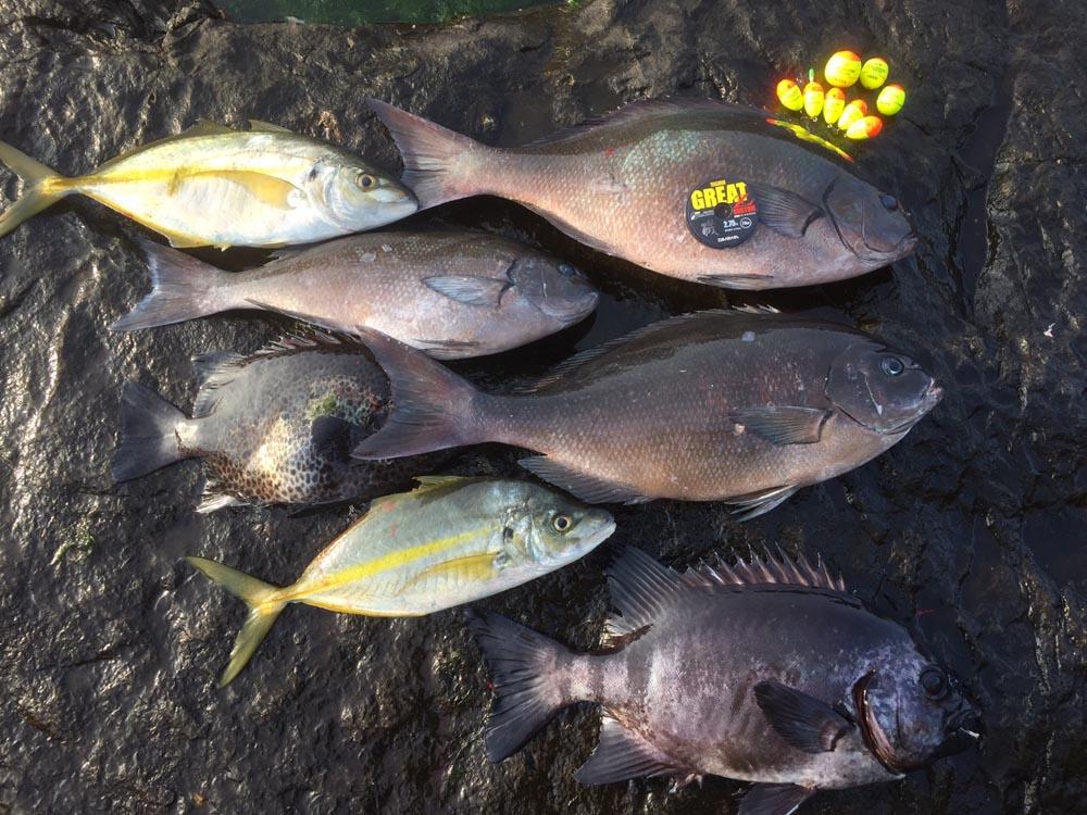 色々な魚が釣れました〜^_^