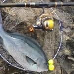 男女群島 昼釣りでロクマル尾長!